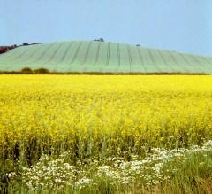 Landscape at Sandhurst hill